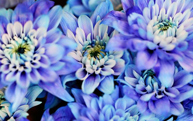 nice flowers   trufflepig, Natural flower