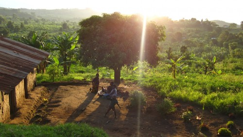 Africa's Feature Forests, Part One: Kibale National Park, Uganda 06