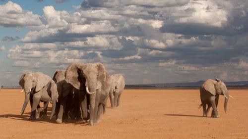 1 Elephant, 2 Elephant, 3 Elephantyv02